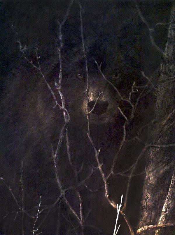John Seery-Lester - close up of wolf on dark encounter print