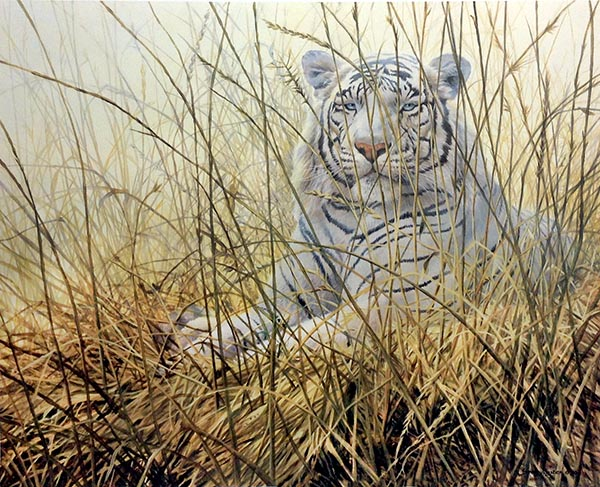 John Seery-Lester - print of white tiger laying in tall grass at sunrise