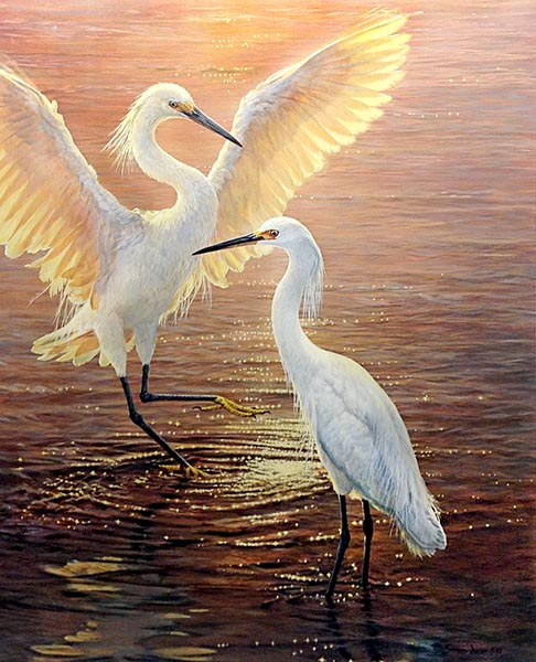 John Seery-Lester - print of two large birds standing in water together at dusk