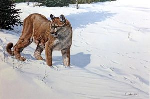 John Seery-Lester - print of panther making pawprints in snowy field