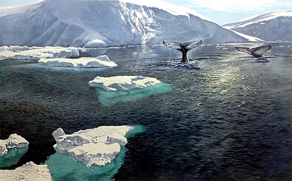 John Seery-Lester - print of whale tails out of icy water surrounded by snowy tundra