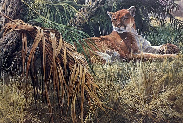 John Seery-Lester - print of panther relaxing among tall grass in sun