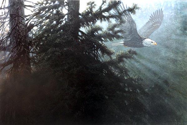 John Seery-Lester - print of eagle soaring through trees at dawn