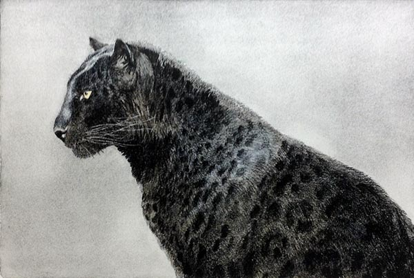 John Seery-Lester - print of black panther in profile