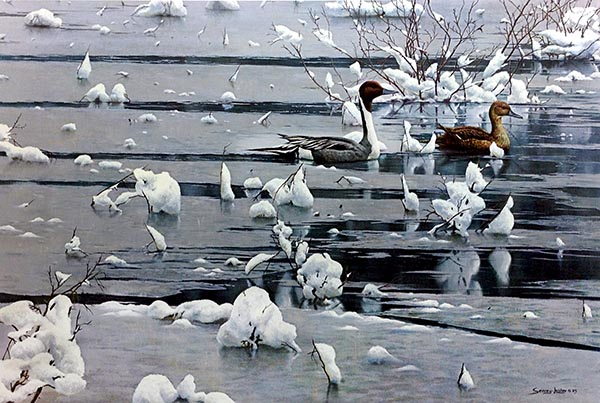 John Seery-Lester - print of two birds swimming on icy water in winter