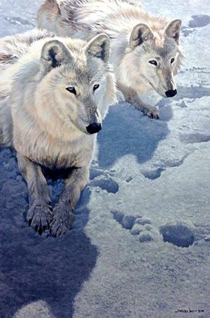 John Seery-Lester - print of two wolves laying in snow