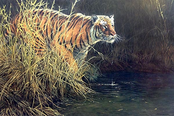 John Seery-Lester - print of tiger among tall grass at edge of water