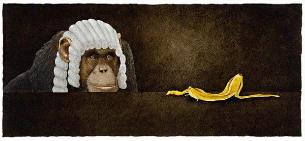William Bullas print of monkey in judge's wig looking at banana peel
